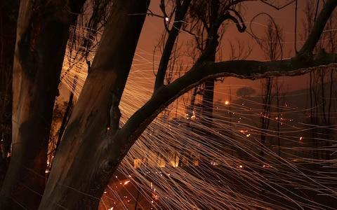Embers blow from burned trees as strong winds push the Thomas Fire across thousands of acres near Santa Paula - Credit: Reuters