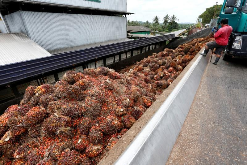 FILE PHOTO: A worker unloads palm oil fruit bunches from a lorry inside a palm oil mill in Bahau, Negeri Sembilan, Malaysia