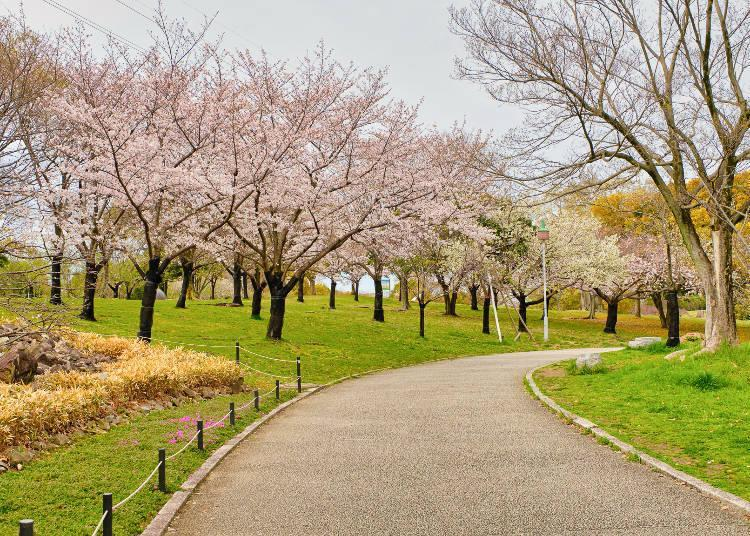 The large park was created in 1989 to give Sakai a Japanese garden with international appeal