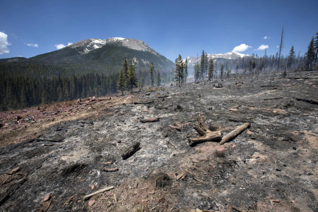 <p>The ground continues to burn as a result from the Buffalo Fire in the Wildernest neighborhood near Silverthorne, Colo., Wednesday, June 13, 2018. A wildfire erupted Tuesday in an area of Colorado known for its ski resorts, forcing the evacuation of more than 1,300 homes and marking the latest in a series of blazes that have ignited in the drought-stricken U.S. West. (Photo: Hugh Carey/Summit Daily News via AP) </p>