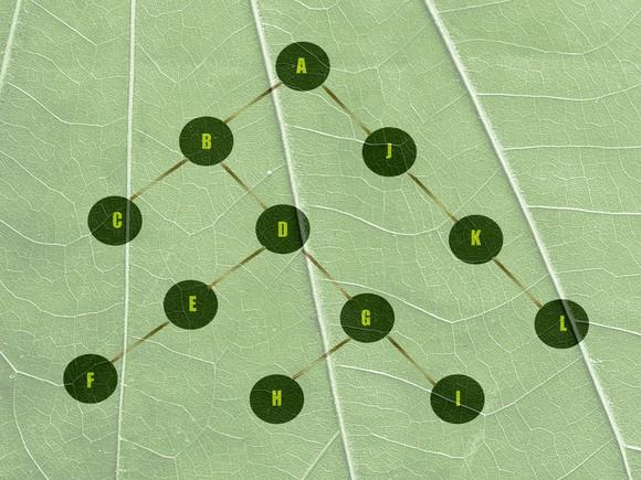 Connected circular nodes branching downwards overlaid on top of a leaf