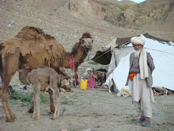 A bearded man in a turban stands with an adult camel and a camel calf in front of a tent.