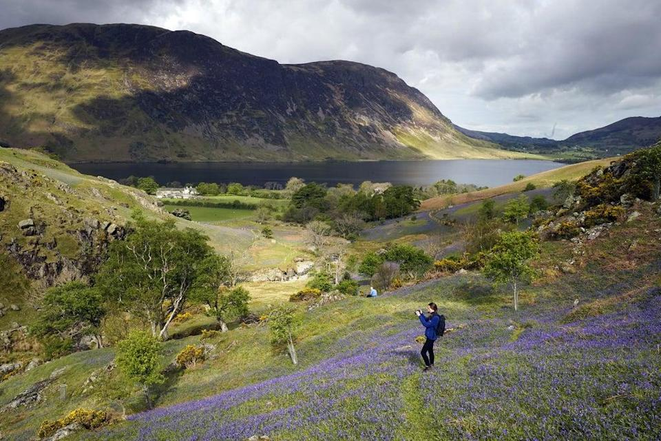 Bluebells in the Lake District (PA Wire)