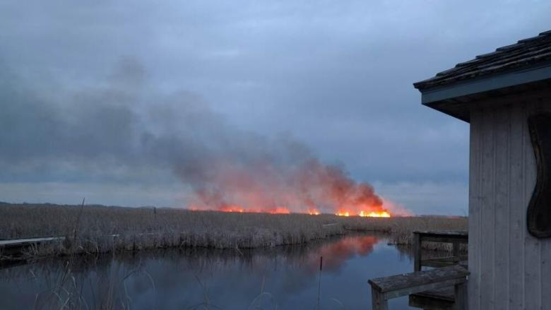 Fire appears to be out after consuming more than 125 hectares of marsh at Point Pelee