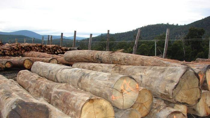 Timber processor Ta Ann staying on