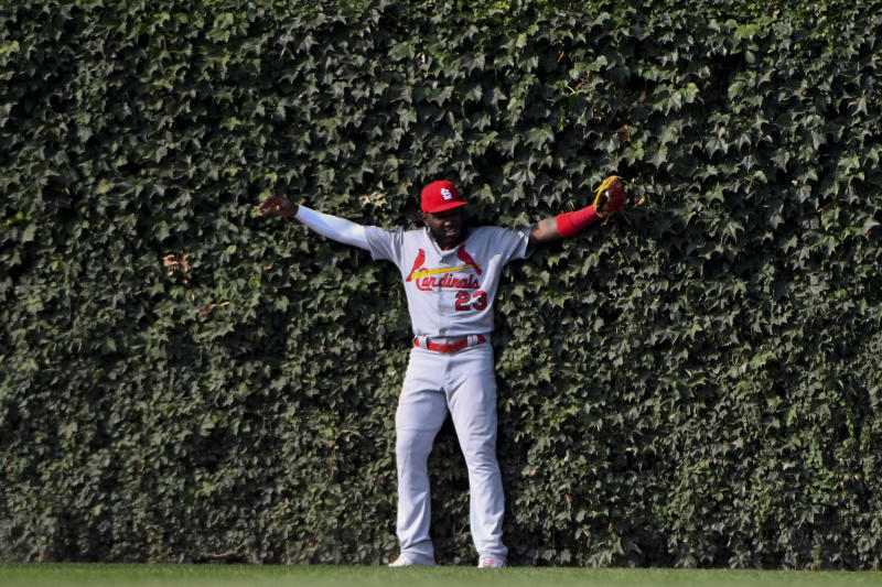 St. Louis Cardinals left fielder Marcell Ozuna (23) leans into the ivy after catching a fly ball hit by Chicago Cubs' Kris Bryant to end the seventh inning of a baseball game Friday, Sept. 20, 2019, in Chicago. (AP Photo/Matt Marton)