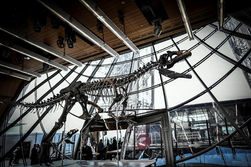 Mystery dinosaur skeleton fetches over $2 million at auction