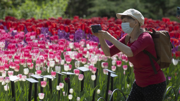 A woman stops to take a photo of blooming tulips near Dow's Lake Tuesday May 18, 2021, in Ottawa, Ontario. (Adrian Wyld/The Canadian Press via AP)