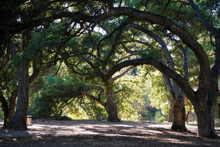 """Trees may not be able to solve all of our problems, but they come close. This is the oak grove at Corriganville Park in Simi Valley. <span class=""""copyright"""">(Michael Owen Baker / For The Times)</span>"""