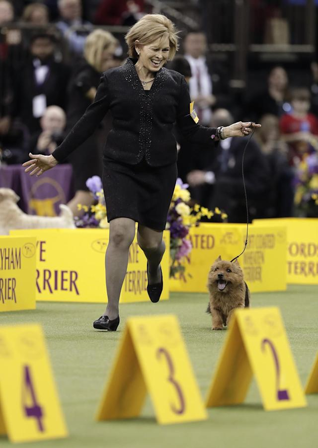 <p>Handler Susan Kipp reacts after Tanner, as Norwich terrier, was announced the winner of the terrier group at the 141st Westminster Kennel Club Dog Show, Tuesday, Feb. 14, 2017, in New York. (AP Photo/Julie Jacobson) </p>