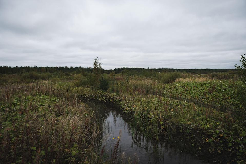 Representational: Photo taken of a barren expanse of bog in southeast Finland  (AFP via Getty Images)