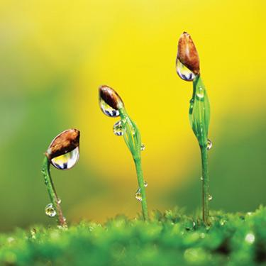 Plants-with-water-droplets_web