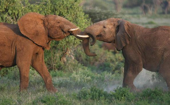 <p>With the Kenya Tourism Board, planning to boost tourism revenues in three years, it offers Indians a VOA to <b>Kenya</b> for a max. stay of 3 months for $50, provided the passport contains at least one blank page for visa endorsement. Extension of stay is possible for additional 3 months. Visitors are required to hold proof of sufficient funds to cover their stay and documents required for their next destination.</p><p>Photo: Getty Images</p>
