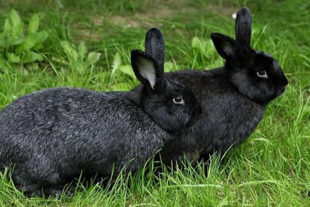 Helena Diosa will be moving to New Brunswick with her family and 20 animals, including four rabbits.