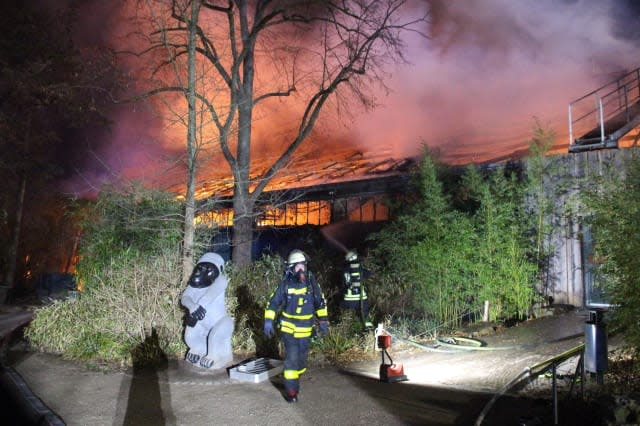 Apes among animals killed in fire at German zoo