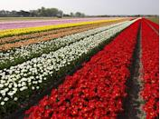 <p>Located in Lisse in South Holland, Keukenhof is one of the world's largest flower gardens, featuring millions of tulips, daffodils and hyacinths. For the most colorful (and perfumed) experience, make sure to visit in the early spring.</p>