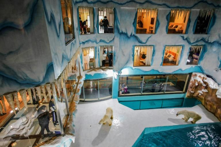 A newly opened hotel in China's northeast is built around a polar bear enclosure for its guests to view