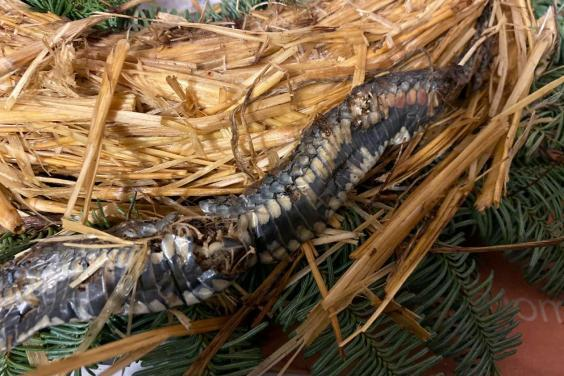 Family feared the reptile may be poisonous (Karl Gaskell / SWNS)