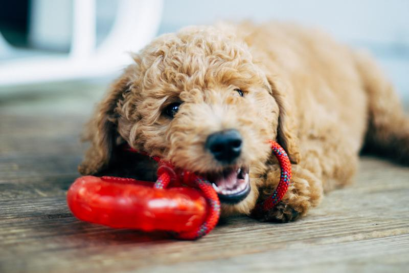 Old dogs still need the (brain and physical) exercise toys create. (Photo: Getty)