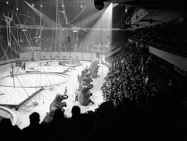 """<p>Opening night performance of the """"Greatest Show on Earth"""" in New York's Madison Square Garden on April 5, 1939. The patrons witnessed the elephant troupe going through their regular paces as the Ringling Brothers Barnum and Bailey Circus opened its 1939 season. (AP Photo) </p>"""