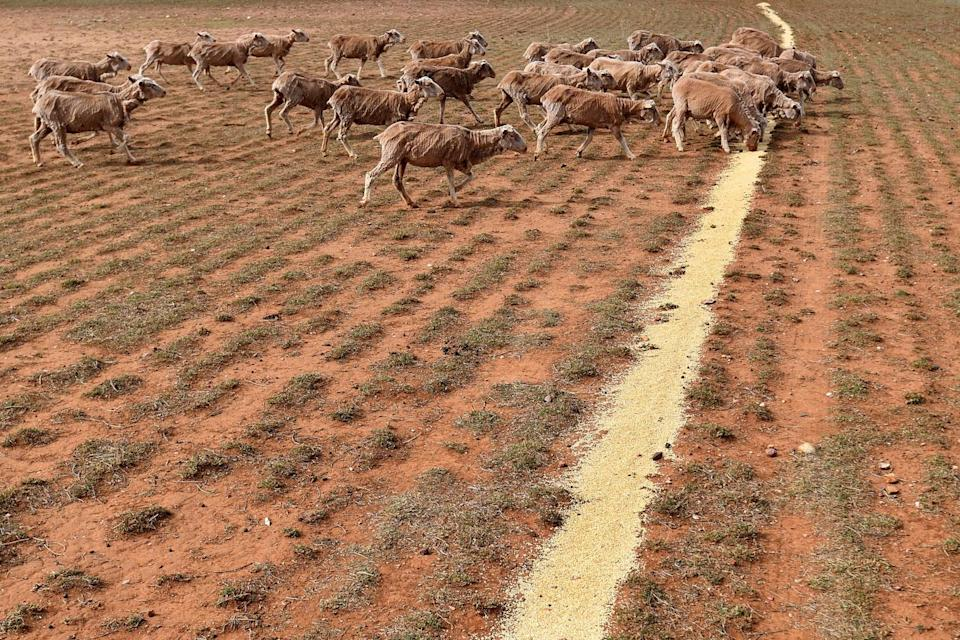 The winner said he had planned to donate to the drought appeal already and now would be able to give more. Photo: AAP
