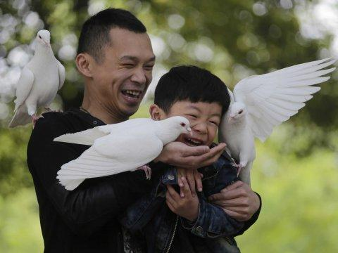 china pigeons doves happy laughing