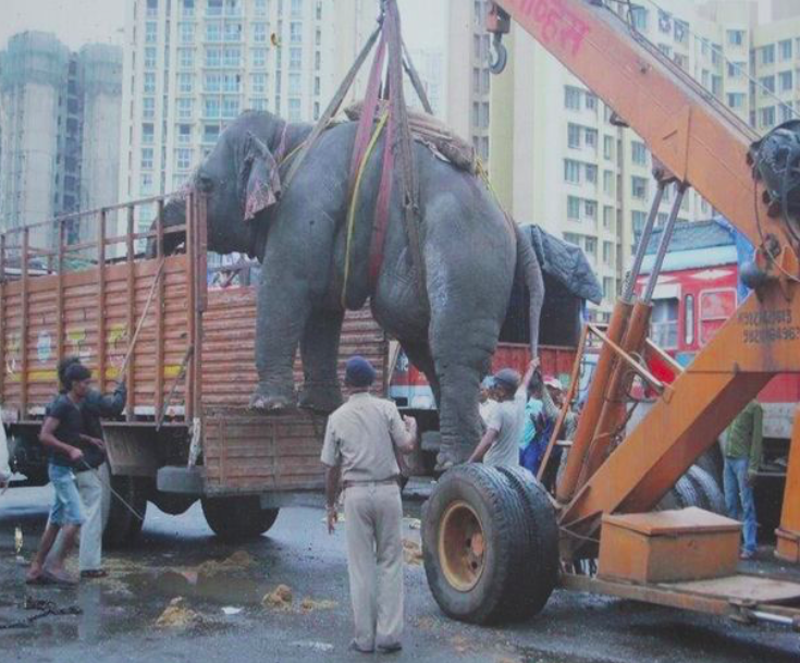 Cruelty: The elephants were rescued from the streets of Mumbai after years of abuse (North Downs Picture Agency)