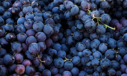 Fresh dark red grapes at market place; Shutterstock ID 4819540; Name: Eva Horanszky; PO: N/A