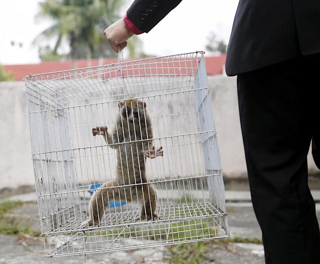<p>A slow loris is carried in a cage by a wildlife department official at the head office in Kuala Lumpur March 24, 2015. It was among other animals estimated to be worth $20,000, including juvenile eagles and a Malayan sun bear cub, seized by the wildlife department during an operation against illegal wildlife traders earlier this month. The illegal global wildlife trade is estimated to be $8 billion a year worldwide, according to TRAFFIC, a wildlife trade monitoring network. (Photo: Olivia Harris/Reuters) </p>