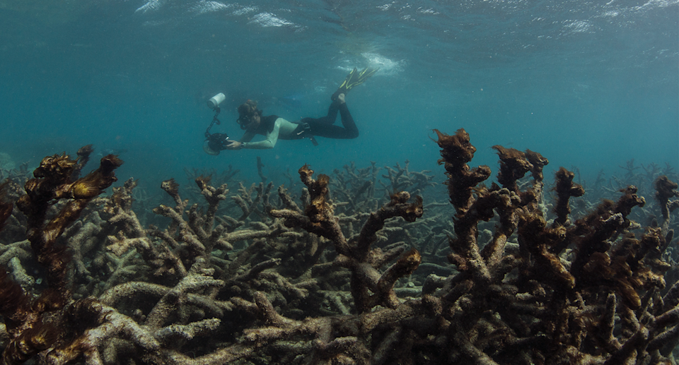 Tourism on the Great Barrier Reef will be impacted without tougher action to reduce global warming. Source: AAP