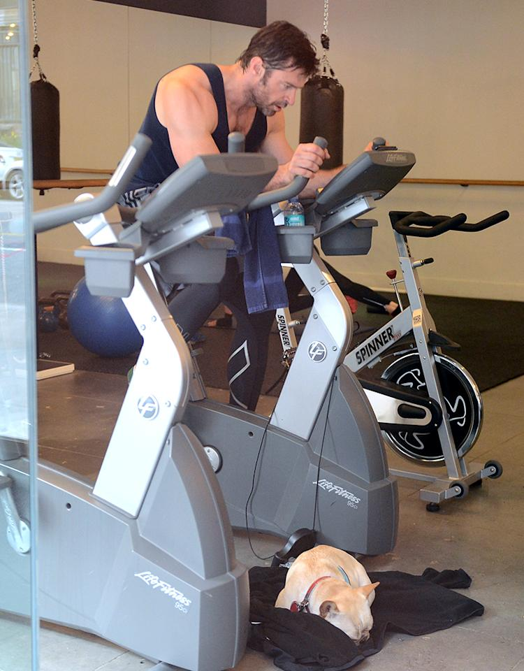 April 15, 2013: Hugh Jackman returns to the gym for an early morning workout and then takes his dog for a walk near his apartment in New York City. While Jackman was at the gym this past weekend, a woman walked up to him and unloaded a razor filled with with her pubic hair while he was working out. Mandatory Credit: Elder Ordonez/INFphoto.com Ref: infusny-160|sp|