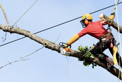 Tree trimming can  subsist a challenging, time-consuming and expensive  endeavor for utility companies. IBM's  novel