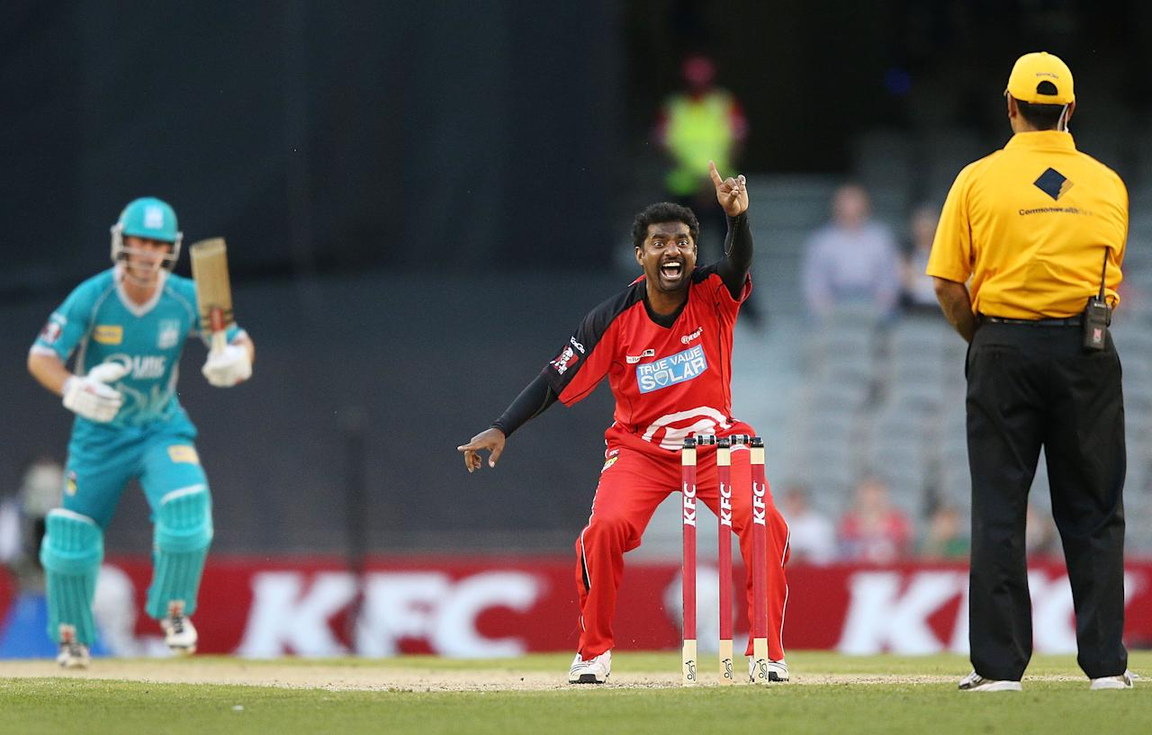 MELBOURNE, AUSTRALIA - DECEMBER 22:  Muthiah Muralidaran of the Melbourne Renegades appeals successfully for LBW to dismiss Chris Lynn of the Brisbane Heat during the Big Bash League match between the Melbourne Renegades and the Brisbane Heat at Etihad Stadium on December 22, 2012 in Melbourne, Australia.  (Photo by Michael Dodge/Getty Images)