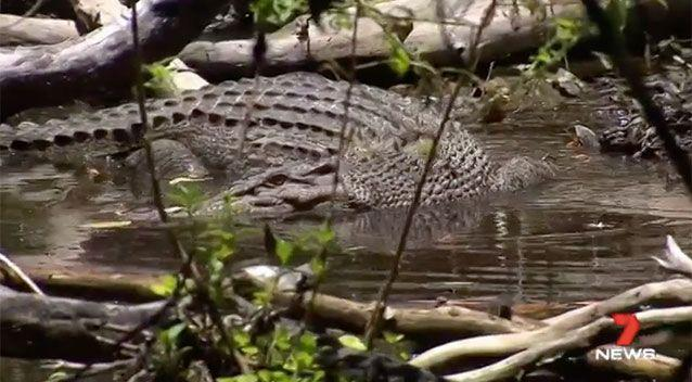 There have been 33 croc attacks since 1985, 12 of them fatal. Source: 7 News