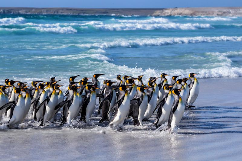 The Falklands are full of wonders - getty