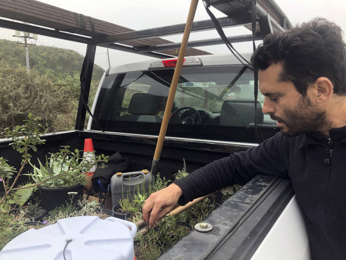 """In San Diego, Daniel Watman reviews plants in a pickup truck before driving to Friendship Park within California's Border Field State Park to resurrect the patch that was bulldozed by the Border Patrol earlier this month, on Saturday, Jan. 25, 2020. The U.S. Border Patrol, reacting to a breach it discovered in a steel-pole border wall believed to be used by smugglers, gave activists no warning this month when it bulldozed the U.S. side of a cross-border garden on an iconic bluff overlooking the Pacific Ocean. On Saturday, after a public apology for """"the unintentional destruction,"""" the agency allowed the activists in a highly restricted area to resurrect the garden. (AP Photo/Elliot Spagat)"""