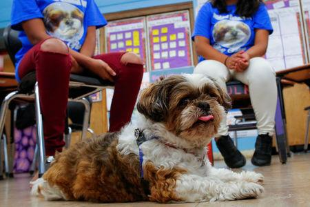 """The dog """"Petey"""" share a moment with children at MS 88 middle school in the neighborhood of Brooklyn in New York, U.S., August 10, 2017. REUTERS/Eduardo Munoz"""