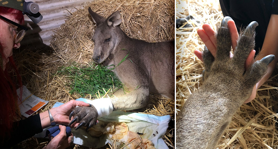 Left - A carer and Big Al lying on hay. Right - Big Al's paw and a human hand coming together.