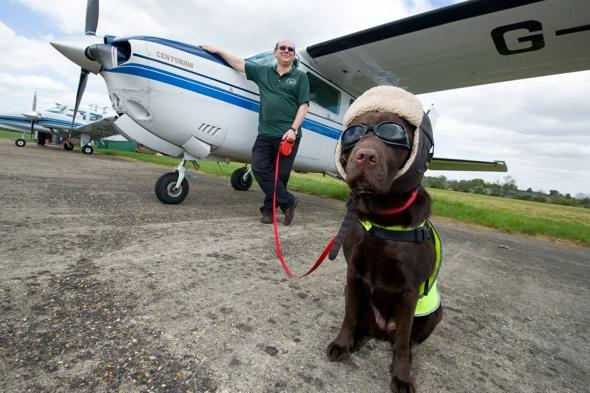 dog-pilot-becomes-first-in-britain-to-get-crew-card