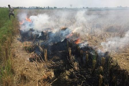 A man burns paddy waste stubble in a field in Karnal district