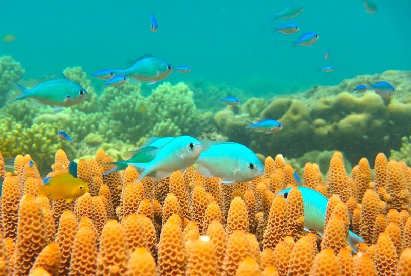 A marine heatwave in 2016 killed off nearly 30 percent of Australia's Great Barrier Reef (AFP Photo/JODIE RUMMER)