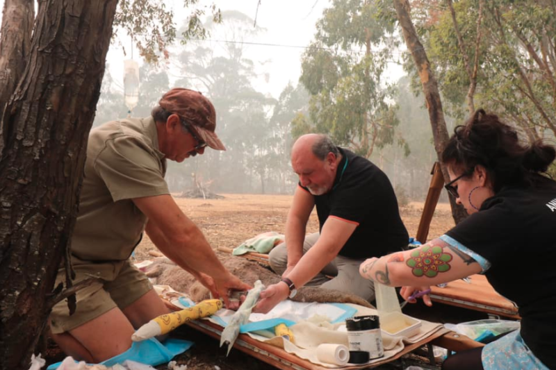NSW MP Mark Pearson treats a kangaroo injured by the bushfires. Source: Animal Justice Party