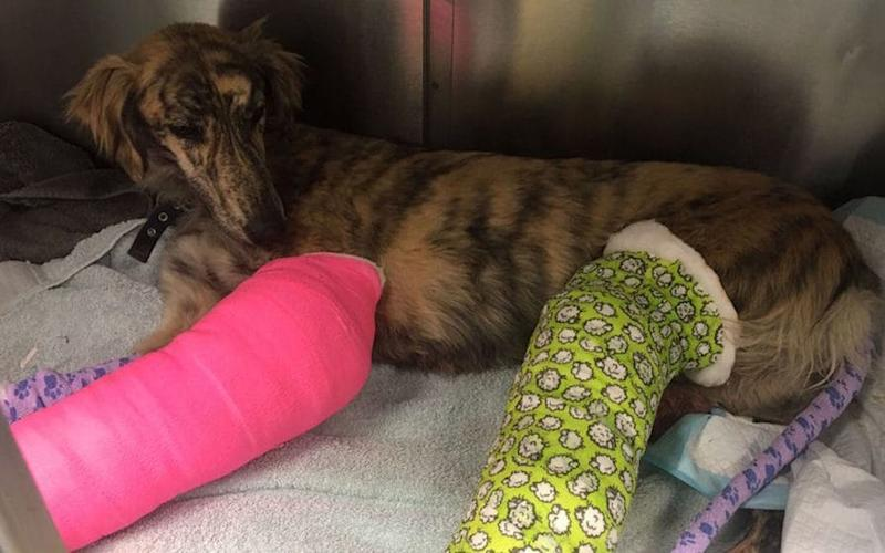 The injured dog is now being cared for by an animal charity.