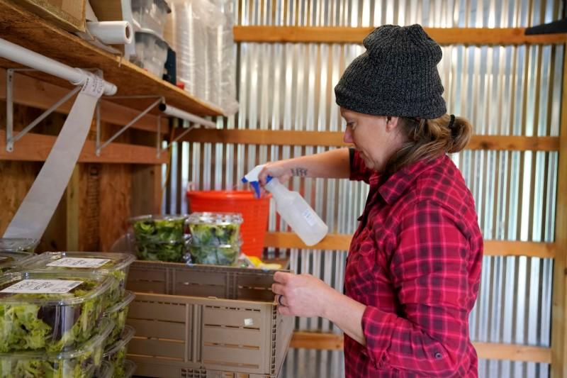 Chlebanowski sanitizes a delivery box for lettuce on her farm in Alex