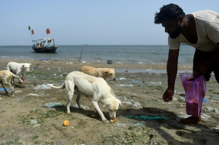 Fisherman Abdul Aziz feeds dogs on Dingy Island near Karachi -- a sanctuary where the animals can avoid a cull on the city's feral dog population