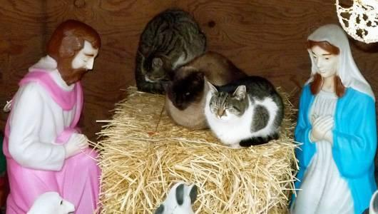 Cats take over a traditional nativity scene by sisters Annette and Sue Amendola
