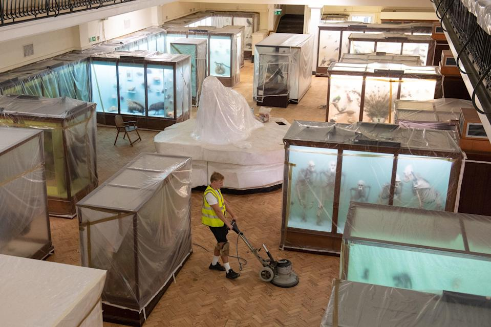The Horniman Museum in London, which had the newly discovered shrimp named after it (PA)