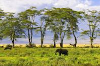 """<p>Every wildlife lover needs to experience the beauty of an African safari at least once and, in our opinion, <a href=""""https://www.goodhousekeepingholidays.com/tours/africa-tanzania-zanzibar-serengeti-safari-seychelles-tradewinds-cruise"""" rel=""""nofollow noopener"""" target=""""_blank"""" data-ylk=""""slk:Tanzania"""" class=""""link rapid-noclick-resp"""">Tanzania</a> is the country that really delivers. The Serengeti is an outstanding place to search for the Big 5 and feel at one with nature. Then there's the Ngorongoro Crater, with its jaw-dropping scenery, and Maasai villages.</p><p>Once you've experienced the wonders on the mainland, you must head to Zanzibar by sea for a completely different view of Tanzania. Here, the beaches have flour-soft sand and you can stroll through the colonial capital of Stone Town. Good Housekeeping's exclusive tour allows you to take in the best of Tanzania by land and sea, with a sailing on new cruise ship, Golden Horizon. </p><p><a class=""""link rapid-noclick-resp"""" href=""""https://www.goodhousekeepingholidays.com/tours/africa-tanzania-zanzibar-serengeti-safari-seychelles-tradewinds-cruise"""" rel=""""nofollow noopener"""" target=""""_blank"""" data-ylk=""""slk:BOOK NOW"""">BOOK NOW</a></p><p><br><strong>We want to help you plan your next getaway with the experts. Sign up for the latest travel tales and to hear about our favourite financially protected escapes and bucket list adventures.</strong></p><p><a class=""""link rapid-noclick-resp"""" href=""""https://hearst.emsecure.net/optiext/optiextension.dll?ID=Mf2Mbm2t6kFIB2qaqu7QV5QAIooPPMrcO%2BU6d2SmsL4zpSgeyQIbzx5P9sbmxMKLhPooFIrsXaC2MY"""" rel=""""nofollow noopener"""" target=""""_blank"""" data-ylk=""""slk:SIGN UP"""">SIGN UP</a></p>"""