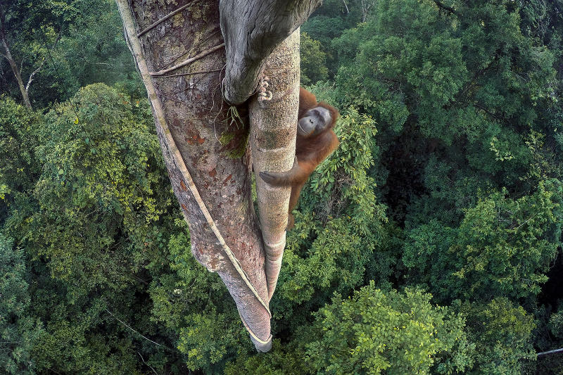 Image that won the Wildlife Photographer of the Year award was shot with a GoPro