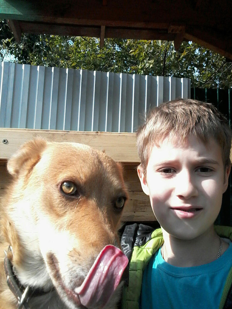Pictured is 13-year-old Ilya with a dog. He was allegedly stabbed in his sleep.